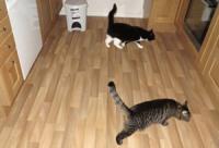 Kattane på kjøkengolvet.