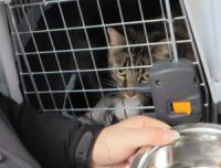 Katt i bur. Vasskål.
